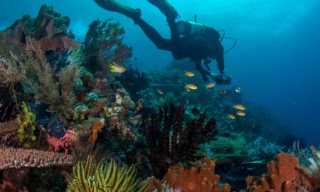 rls-diver-surveying-reef-fi