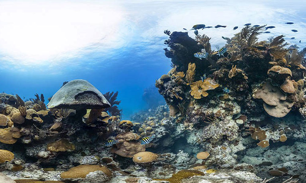 Deep reefs unlikely to save shallow coral reefs - GetSTEM