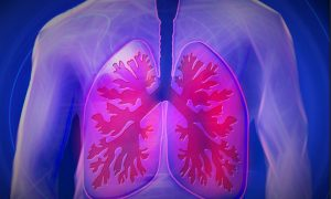flinders-lungs-stock-image