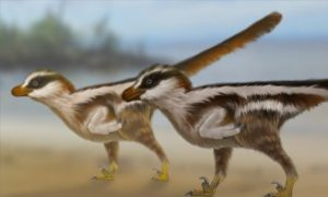 Dinosaur reconstructions by Dr Anthony Romilio.
