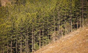 forestry stock image