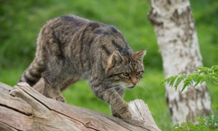 cat wild predator stock image