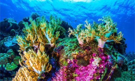 coral stock image