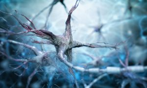 nerve neuron stock image