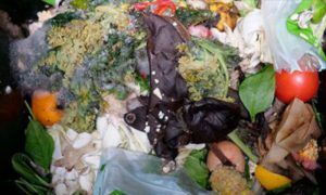 EAIT-food-waste_crop
