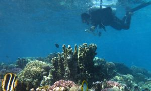Reef Life Survey diver off Lord Howe Island. Credit Antonia Cooper