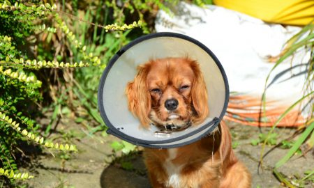 dog with cone stock image